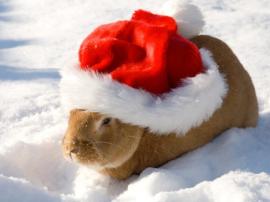 bunny wearing santa hat